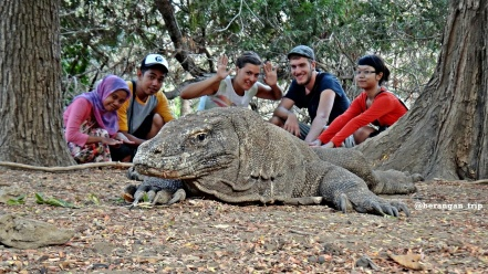 The big Komodo