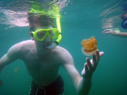 Sebastian berenang bareng ubur-ubur
