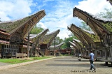Tana Toraja : Land of the Death (2)