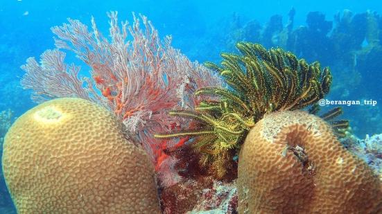 Underwater Pasi Gusung