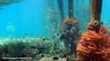 Terpesona Bawah Laut RajaAmpat
