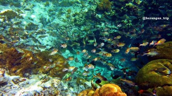 Fish traffic di sumur ikan