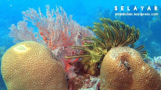 Underwater Selayar. Taken by Ricky D.
