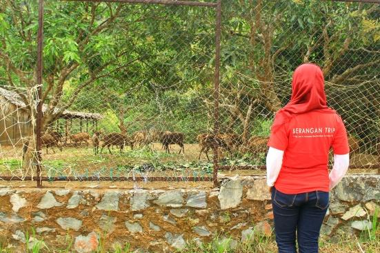 Backfie dulu depan kandang rusa :p